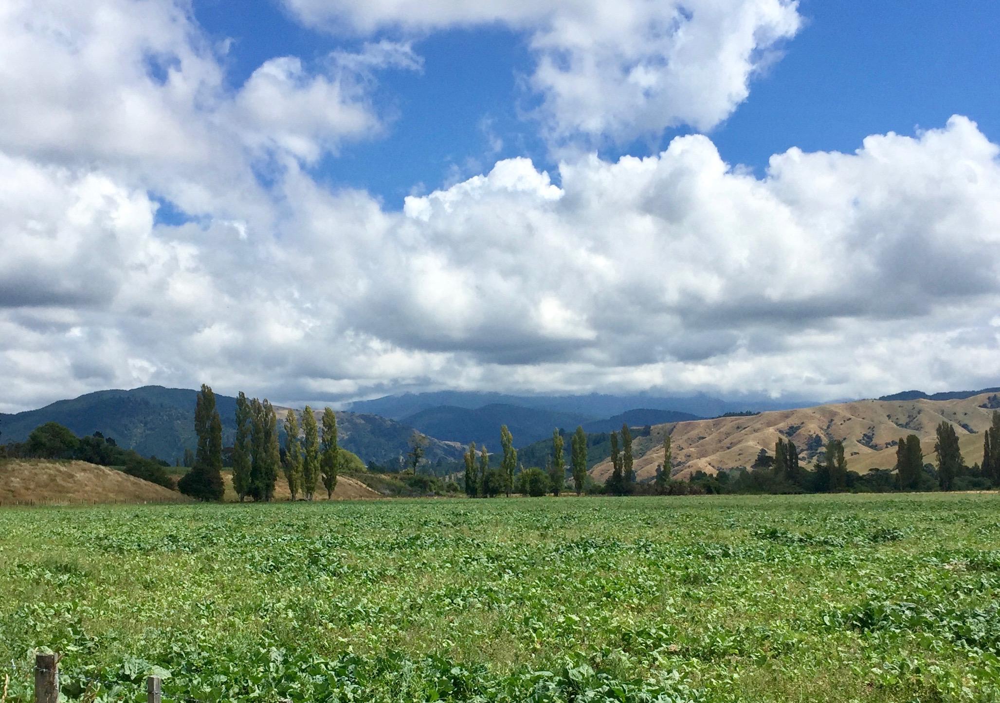 Weedy fields